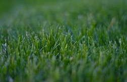 Lawn & Pasture Seeds