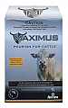 Maximus Pour-on for Cattle 1L